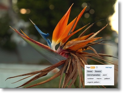 Bird of paradise photo with metadata as described