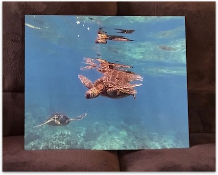 Turtles metal print sitting on couch
