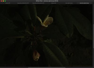 Plumeria night 6