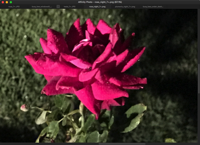 Rose night 7+