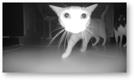 Infrared kitty