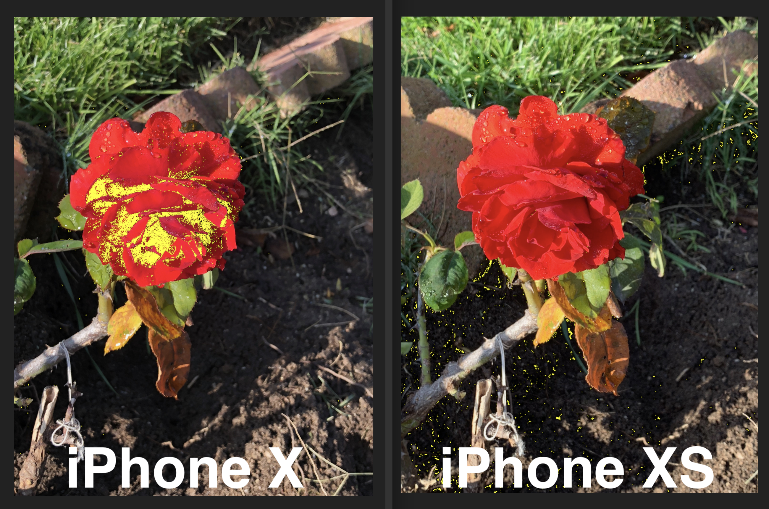IPhone X vs XS red rose clipped tones 2600 72