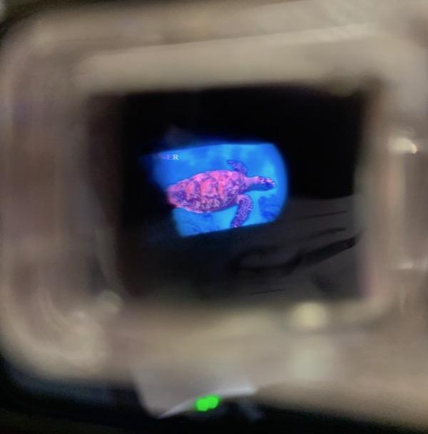 Turtle image inside Retissa