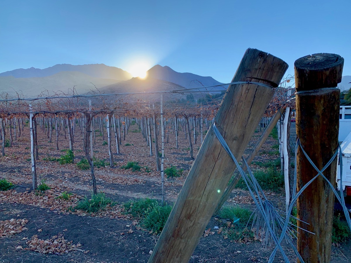 01 Vinyard Sunrise