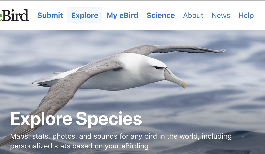 eBird site showing explore species